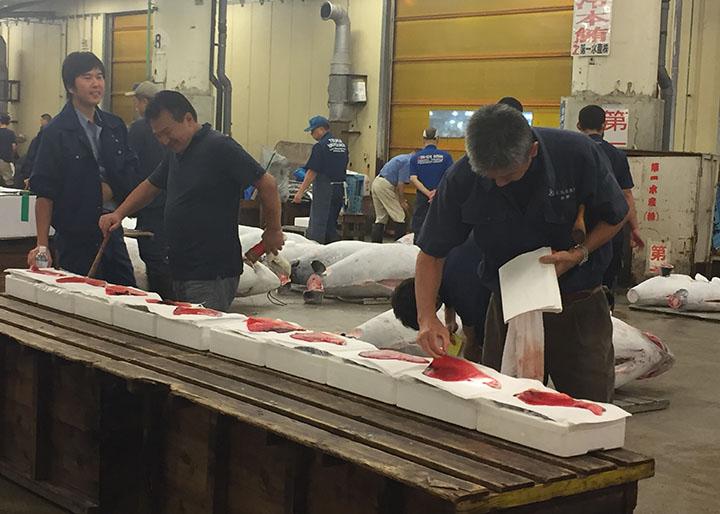 某檔主正在視察鮪魚。拍賣前半小時,投標者要對超過1000條鮪魚進行評估,作為投標基礎。