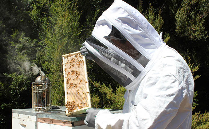 Honey contains natural enzymes that get destroyed with heat. Photo credit: Leatherwood Honey