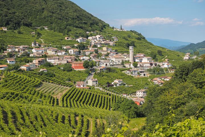Prosecco vineyards in Veneto, Italy