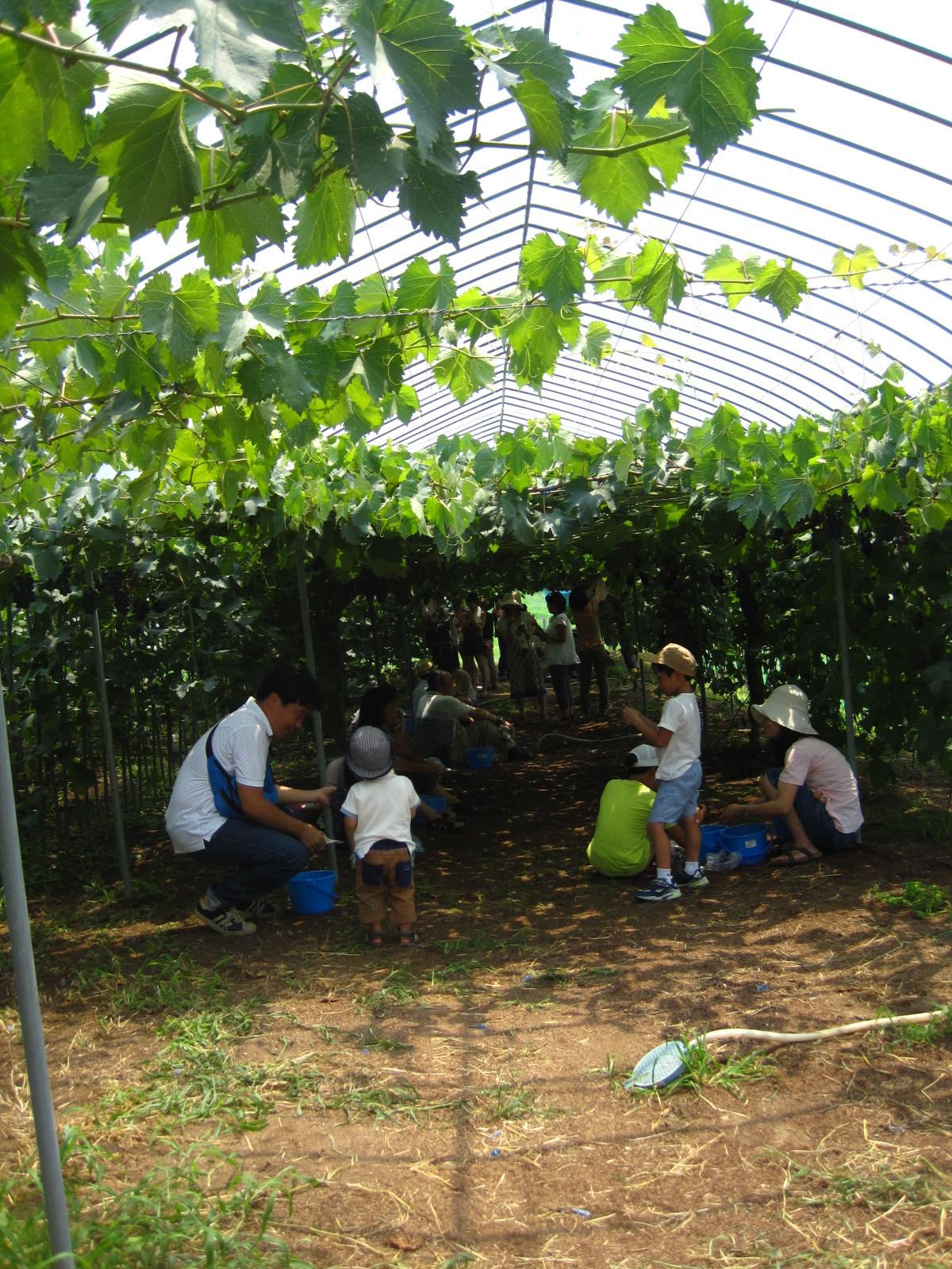 不同果園主打不同當季水果。