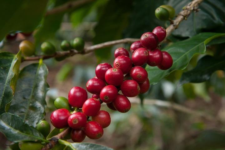 Nespresso 的「AAA 可持續品質計劃」,令品牌的咖啡,做到永續的同時,也是全球最頂級的咖啡。