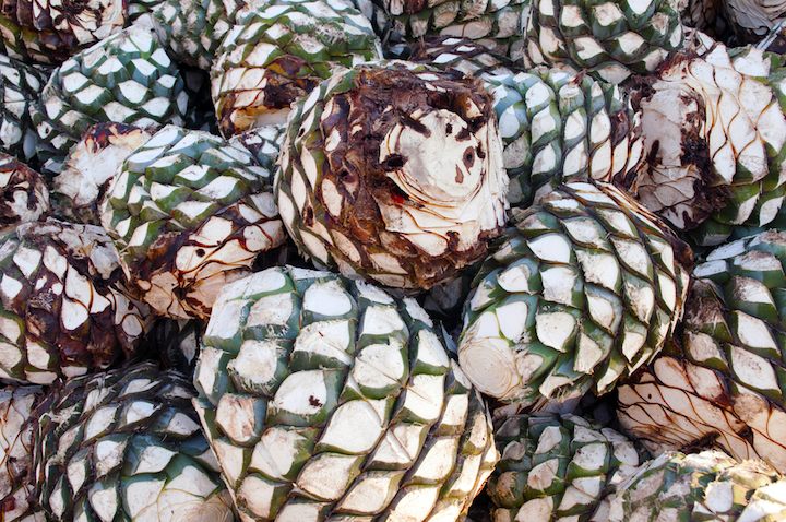 The agave pinas (hearts) are fermented, then cooked in pit ovens over three days and turned into mash using a stone wheel.