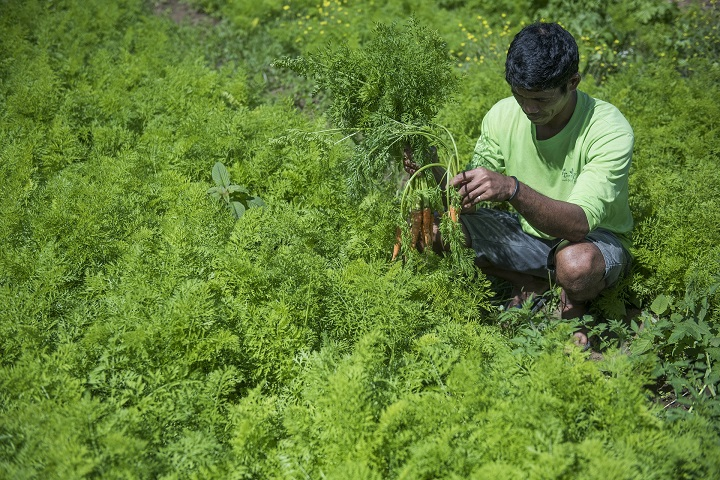 農業佔了菲律賓 32% 的土地面積。 (攝影:George Tapan)