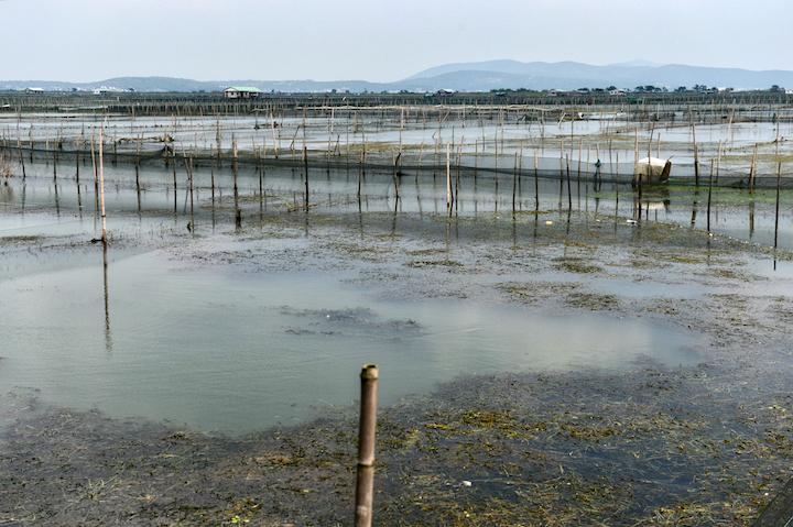 大閘蟹養殖場,陽光好時可照到池底。(攝影:鄔智明)