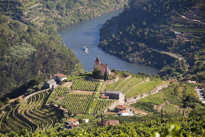 葡萄牙的葡萄田。