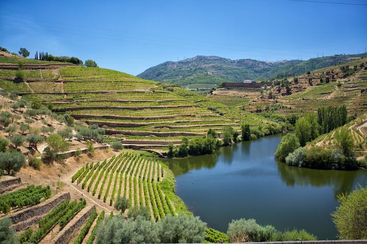 杜羅河谷的綺麗梯田葡萄園。