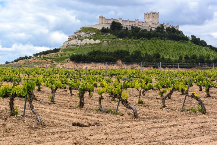 位於西班牙巴利亞多利德附近的古老酒產區。